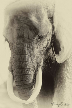 elephant grande defenses
