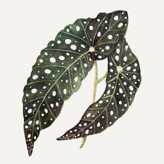 Stippenplant