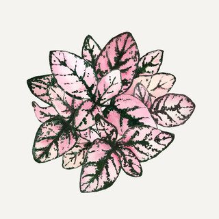 botanische-poster.jpg