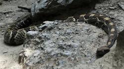 Snake_Cam2P