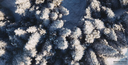 Snow Forest Full CGI