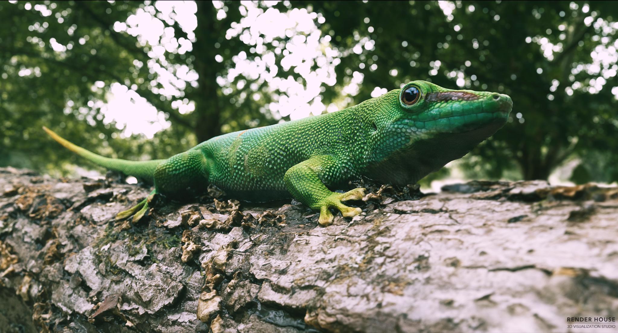 Green Gecko_CG