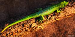 Green Gecho Warm