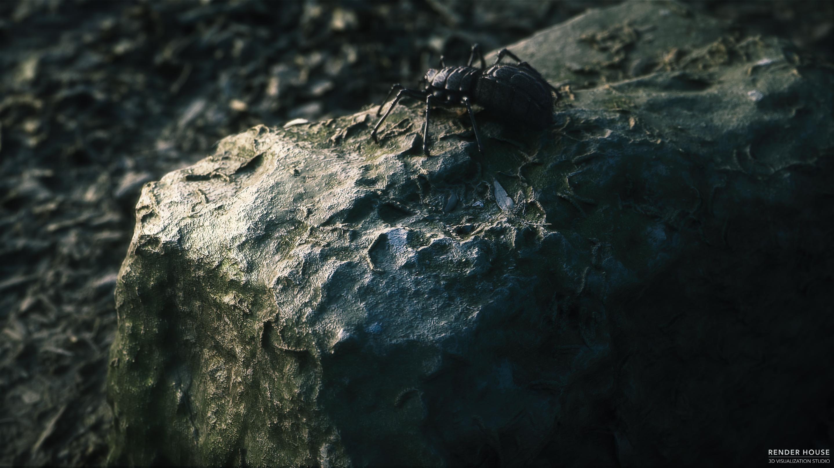 Spider_CG