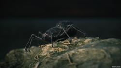Spider_Close_Up