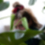 Slothmotion.jpg
