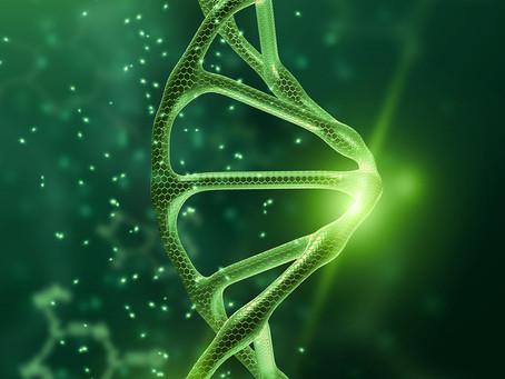 Um gene chave para melhorar a imunoterapia dos tumores de cabeça e pescoço