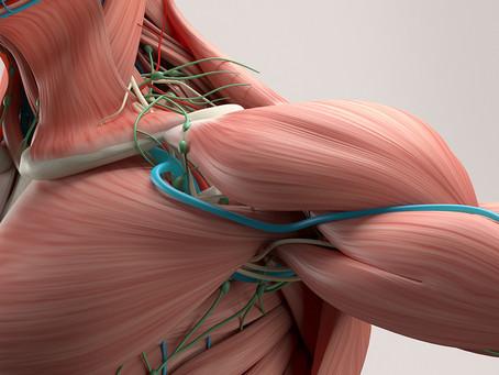 Gerenciamento de íons cálcio pode ser uma nova abordagem para lesões musculares