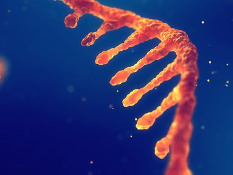 RNA longo não codificante é esperança de melhorar rejeição a transplantes