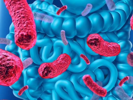 Composição da dieta influencia o status inflamatório da microbiota intestinal