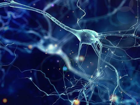 Nova abordagem de terapia gênica se mostra promissora no reparo neuronal