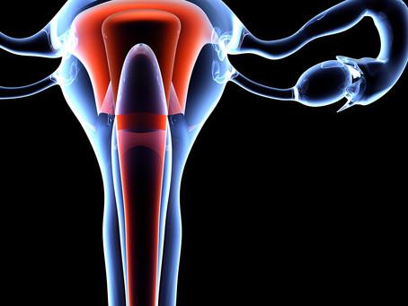 Óvulos viáveis produzidos a partir de células da granulosa do ovário