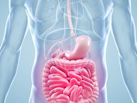 Há um link entre defesa contra patógenos e absorção de nutrientes no intestino
