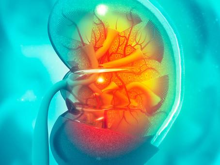 Estudo desvenda mecanismo da lesão renal após exposição solar no lúpus