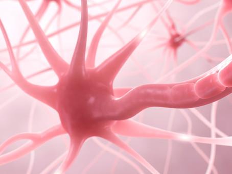 Estudo demonstra funções defensivas dos nervos intestinais no combate à infecção