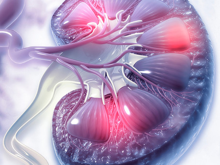 ACE2 indica terapia promissora e funciona como biomarcador no câncer renal