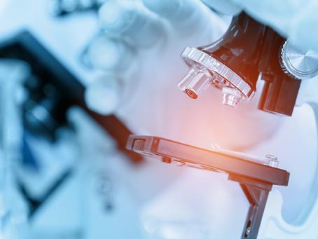 Pesquisa identifica grupo de células responsáveis pela regeneração hepática