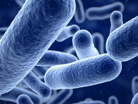 Uma bebida probiótica contra a resistência microbiana aos antibióticos
