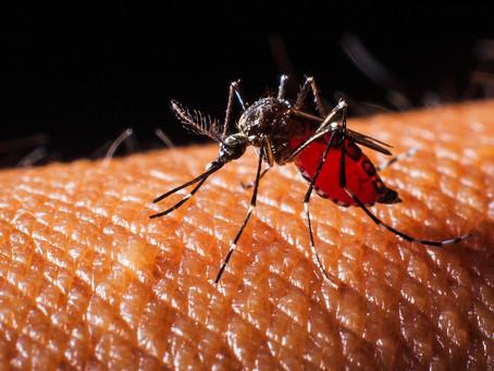 Estudo desenvolve anticorpo capaz de impedir a infecção por dengue