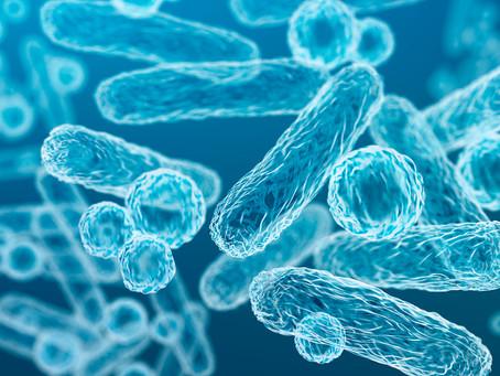 Estudo brasileiro identifica antifúngico em bactérias de formiga