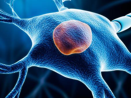 Pesquisa alerta para importante viés em estudos neurológicos com tecidos pós-morte