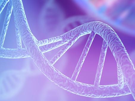 Estudo em peixes identifica gene chave para a regeneração cardíaca após lesão