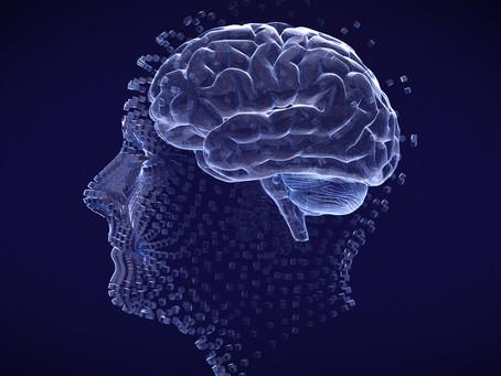 Estudo desvenda sistema de controle da perfusão sanguínea cerebral