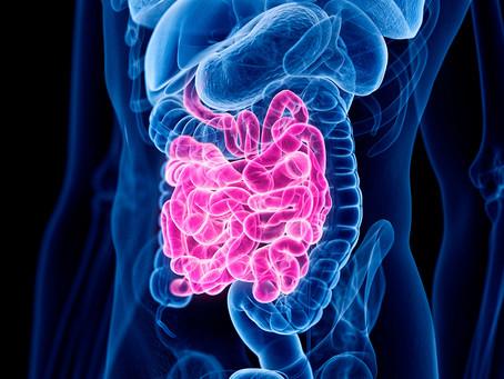 Identificado mecanismo da dor na síndrome do intestino irritável