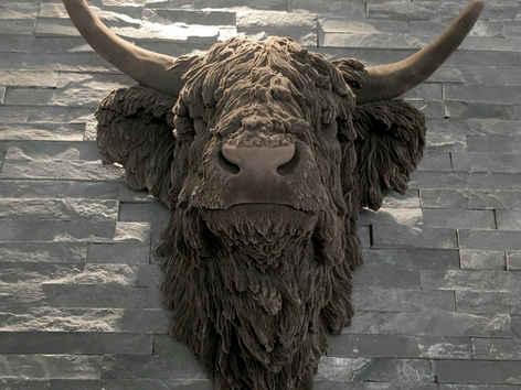 Hamish - The Chalet Bull
