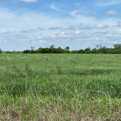 Got Rye? Use the CoAxium Wheat system to rid problems like this field with: Fusion AX, Atomic AX, Helix AX, Photon AX and Cresent AX.