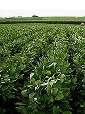 Dyna Grow Seed.jpg