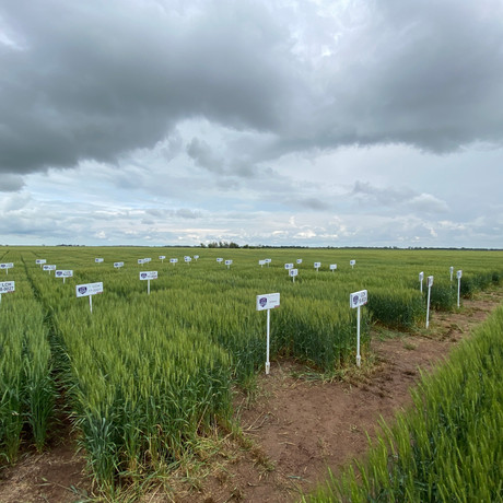 Field plot signs posted before CoAxium Wheat Field Tour 2021