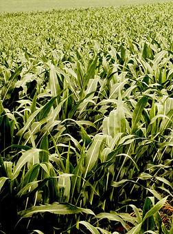 Dyna Grow 118.jpg