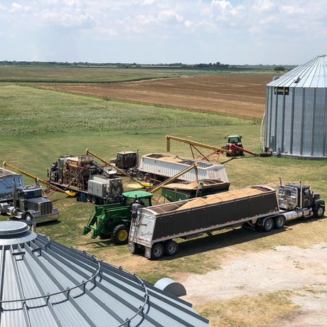 Seed Wheat Cleaning 2020