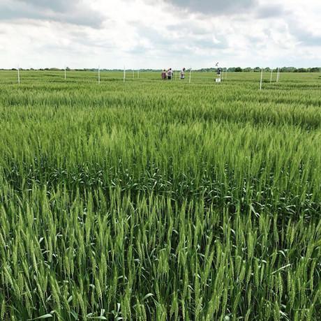 Field Plot Varieties