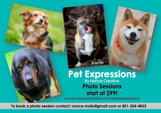 Nance Creative launches Pet Expressions!