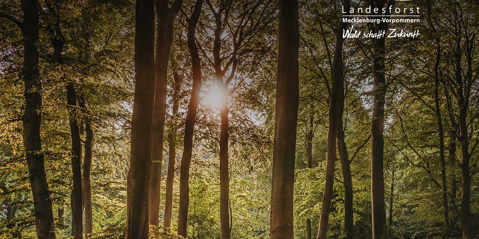 Waldkräuterwanderung in Kooperation mit der Landesforst MV