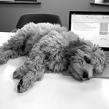 Charlie Crouch - Office Vacuum and Dog at Generate