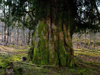 El Parque Natural de Urbasa y Andia