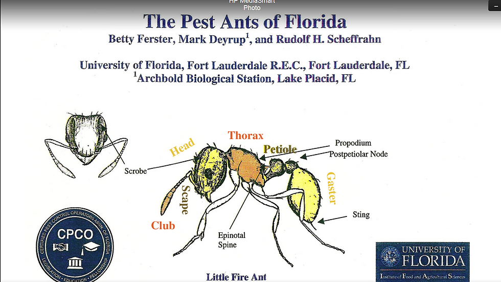 Pest Ants of Florida Book
