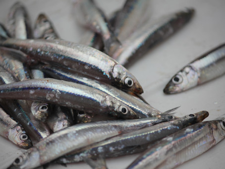 Fishing for DNA (without bycatch)