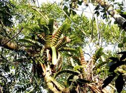 quilomboflora