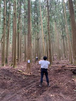 林業施業現場調査/報告
