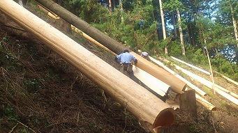 <第37稿>吉野杉 土用伐り(杉の伐り旬)