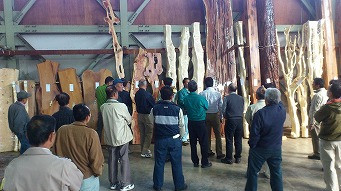 <第40稿>150本長尺杉材伐採・葉枯らし・奈良の木デザインのお披露目