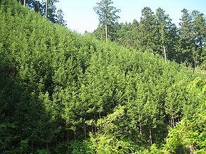 201105森庄若い山の写真.jpg