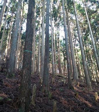 <第56稿>秋~冬に出荷します/森林計画