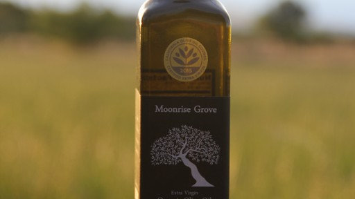 2019 Harvest Year Organic Extra Virgin Olive Oil - Mission