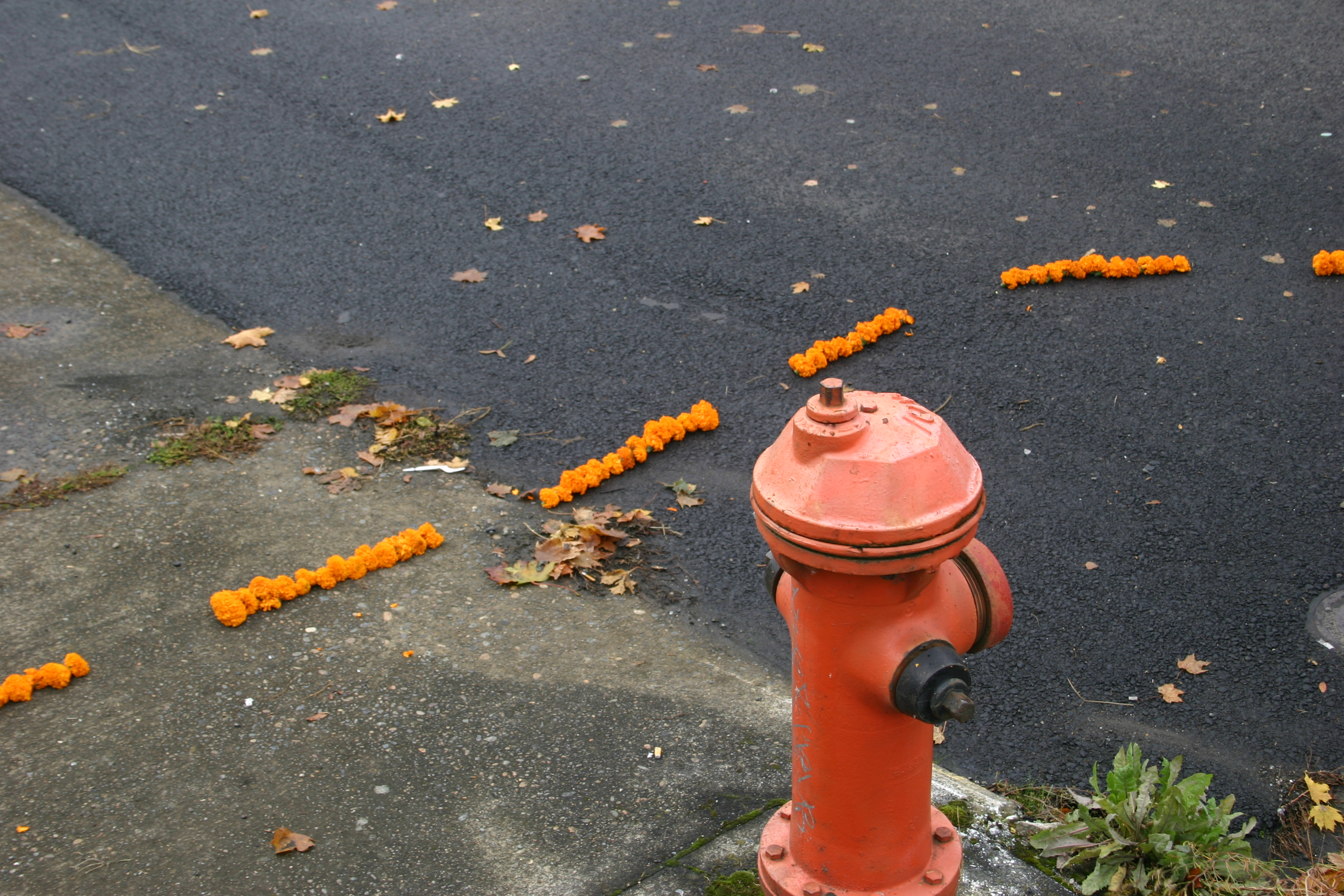 """Marigold Road"", alternate view"