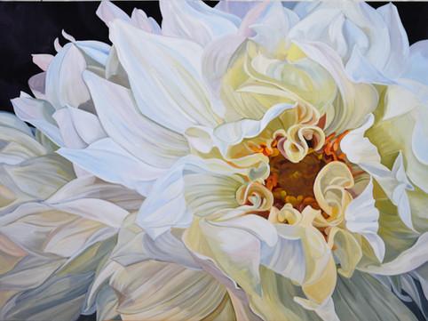 Rhapsody - white dahlia - SOLD